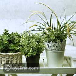 بالفيديو أفضل 10 نباتات زينة منزلية داخلية 